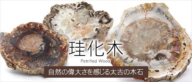 ペトリファイドウッド(珪化木)磨き