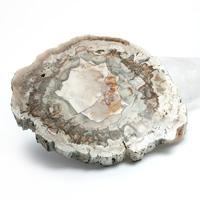 マダガスカル産ペトリファイドウッド(珪化木)磨き-005