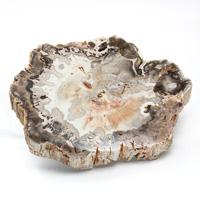 マダガスカル産ペトリファイドウッド(珪化木)磨き-007